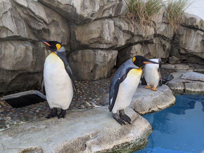 「海獣ひろば」ではペンギンに注目!