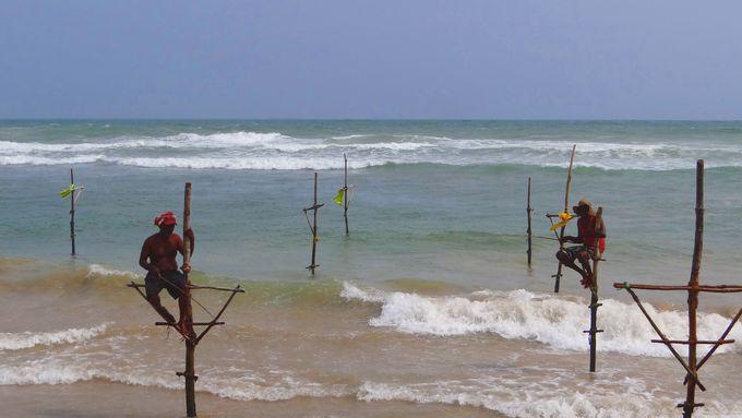 唯一無二の伝統漁法 Stilt Fishing