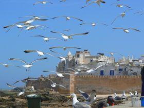 もう一つの西の果て モロッコ「エッサウィラ」〜カモメが乱舞する白と青の城砦都市