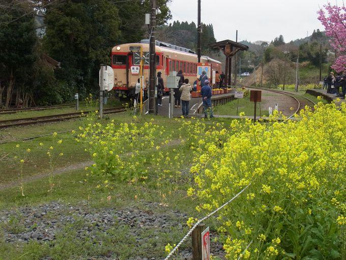 いすみ鉄道は、ゆっくりした時間が流れ、失われていた自分を取り戻せる場所かもしれません。