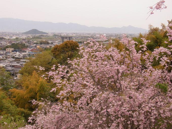 三輪山へ登拝する人へいくつかの注意です。