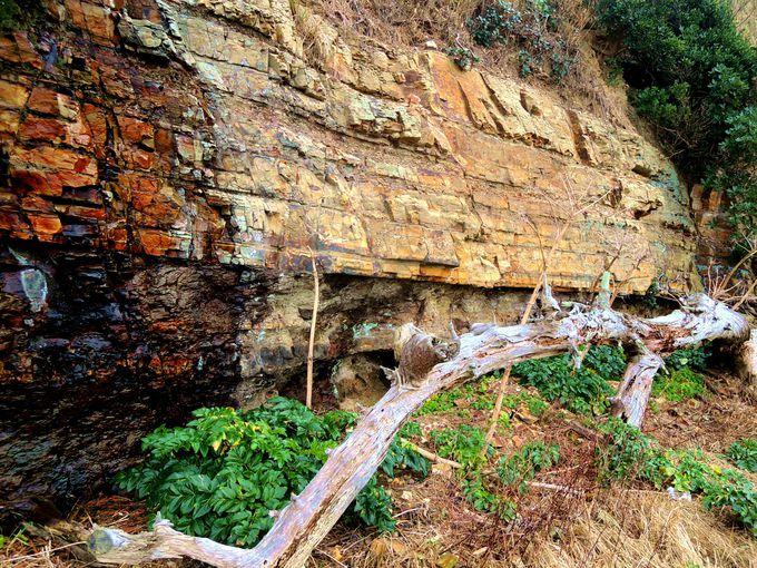 外浦エリアで佐久島2,500万年の歴史を体感