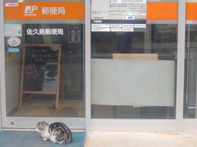 佐久島一周は東港から!猫の島とグルメを満喫