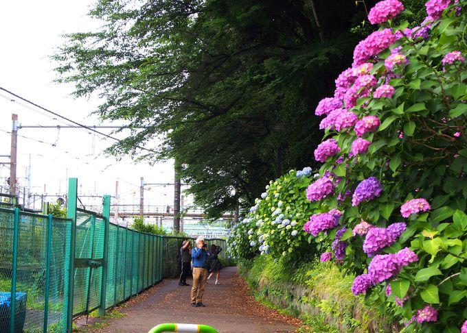 飛鳥の小径は王子駅中央口から徒歩1分!