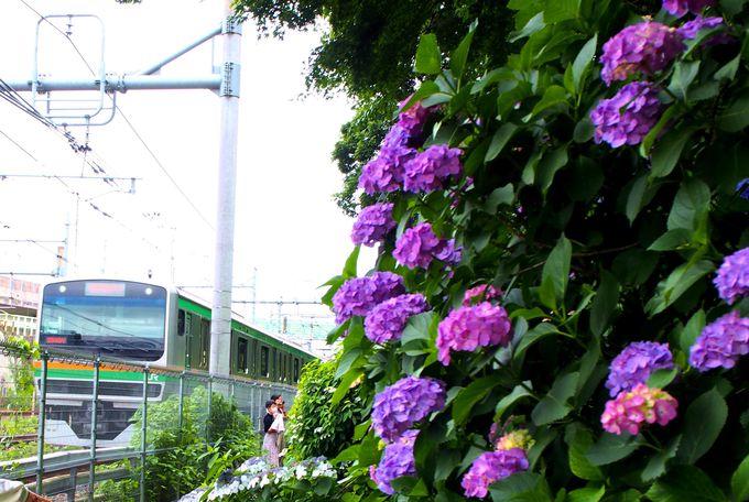 飛鳥の小径で撮る!紫陽花と鉄道のツーショット