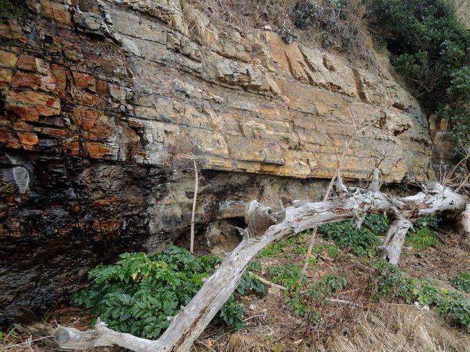 約2.500万年の歴史が・・!佐久島の地層もチェック