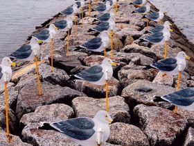 にほんの里100選の癒しを!愛知県佐久島の老舗宿「佐久島館」