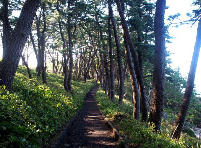 幻想的な空気が漂う「淀の松原」