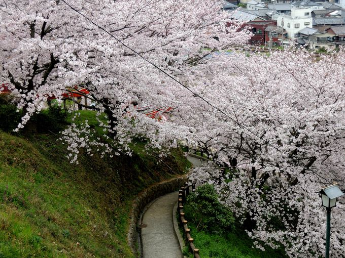 遊歩道を歩きながら瓦のふるさと公園を春さんぽ