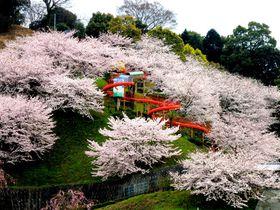 桜の中を滑り台がスイ〜!今治「瓦のふるさと公園 かわら館」で春さんぽ