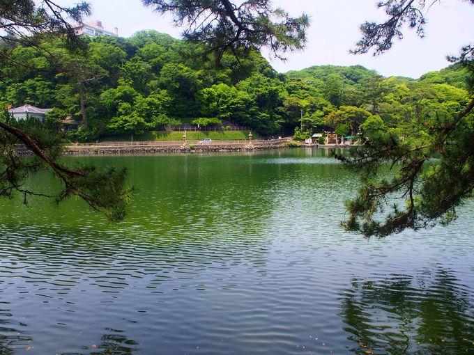 池なのに鯛やヒラメが泳いでる?不思議すぎる「明神池」