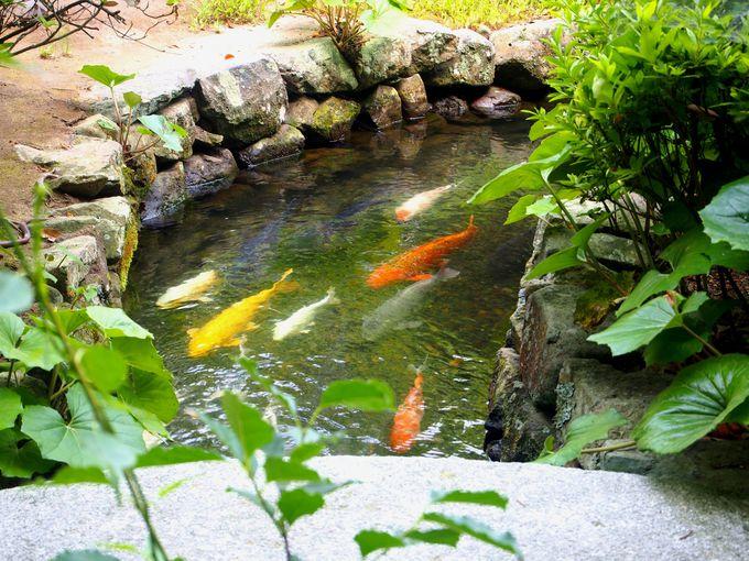 湯川家屋敷の庭園を散策