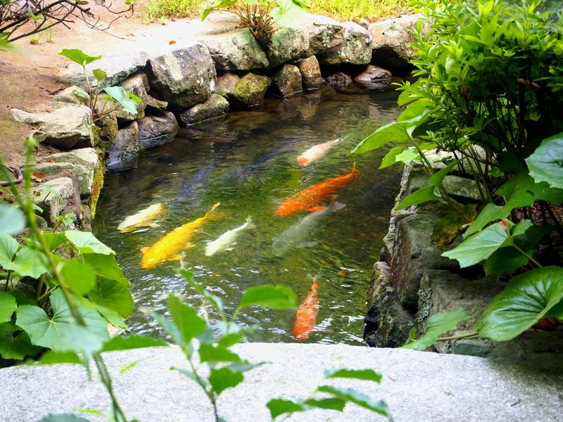 町の中を鯉がスイスイ!萩の「旧湯川家屋敷」と藍場川めぐり