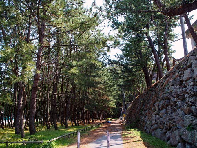 13時頃:石垣の散歩道の風情を感じながら唐津城へ