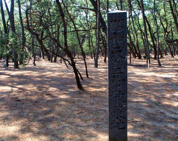 15時頃:神秘的な空間!虹の松原を歩く