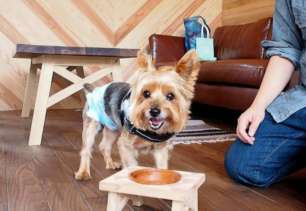 可愛い看板犬がお出迎え!Woodwork Studio Noah