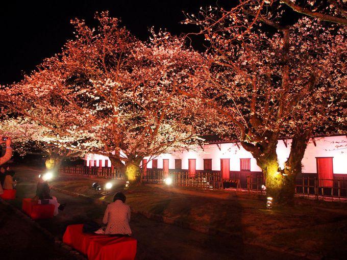 桜と白壁が光に包まれる!福岡城 多聞櫓のライトアップ