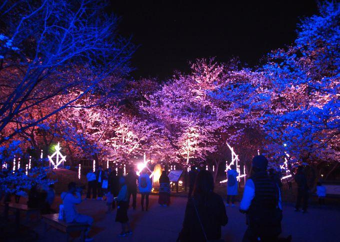 御鷹屋敷跡では光と音楽のコラボが桜を魅せる!
