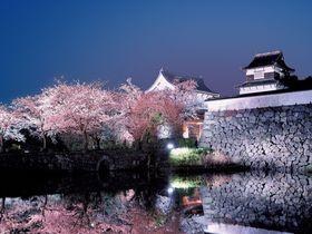 福岡城さくらまつり 2019!桜のライトアップ撮り歩きガイド