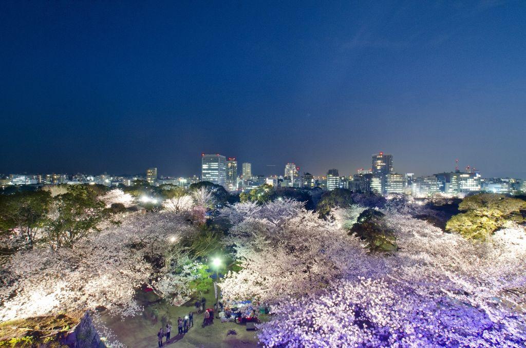 天守台で桜と夜景の絶景を見たら多聞櫓へ‥途中のしだれ桜も