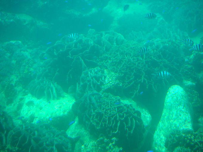 サンゴに熱帯魚!海中の展望室へ降りて天然の水族館へ
