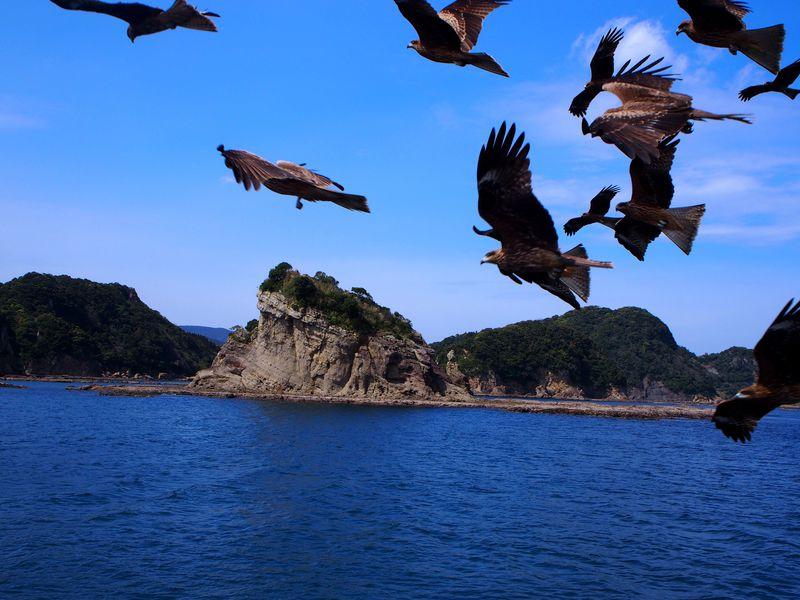 宮崎「マリンビューワーなんごう」で日南海中公園へ!スリルと絶景の45分