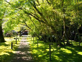 宮崎「飫肥城下町」のおすすめ観光ルート!お得なマップ&グルメ情報も