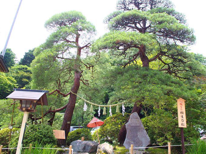 長瀞駅から徒歩15分!1900年の歴史を持つ宝登山神社