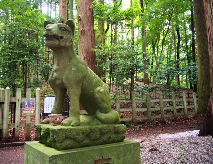 お犬様が迎えてくれる宝登山神社・奥宮へ!