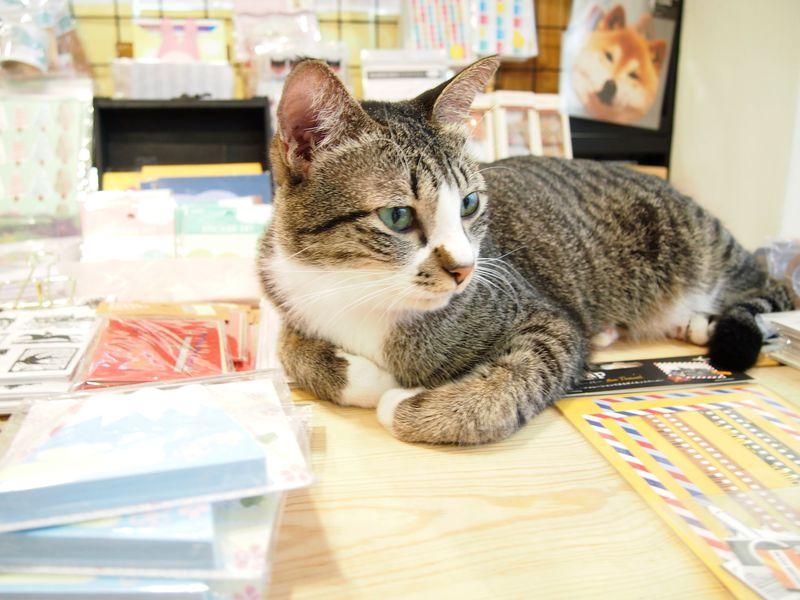 大人女子胸キュン!3匹の看板猫がいる文房具店inマレーシア