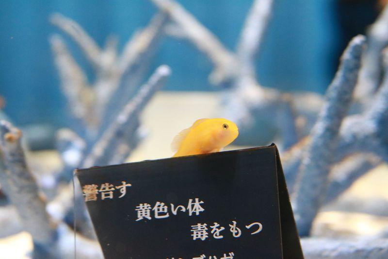 生きているミュージアム!五感で楽しめる大阪「ニフレル」