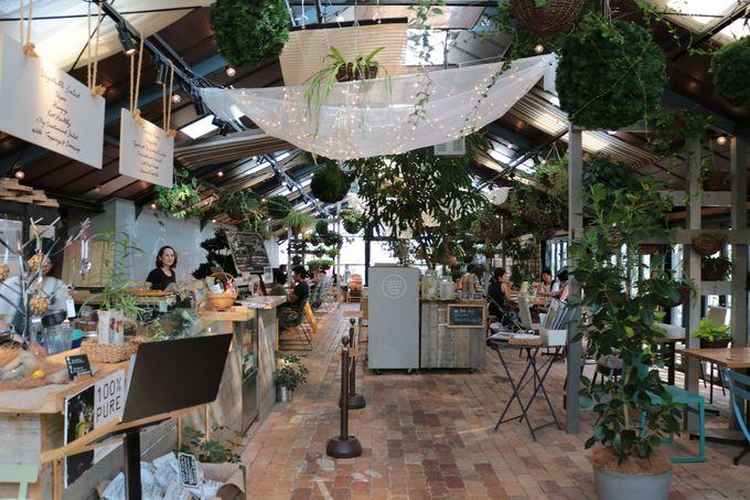 食べる!緑に囲まれてカフェランチ