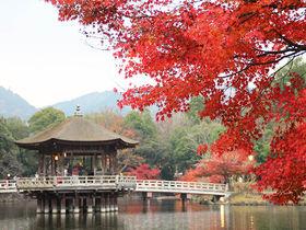奈良の隠れた休憩スポット!水辺の風情を楽しむ「鷺池の浮見堂」