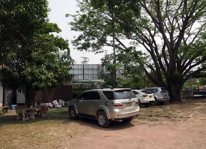 未舗装の駐車場の中には、マメ科植物の大木が・・・