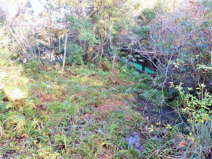 北方系から亜熱帯系までの植物が共存する不思議空間