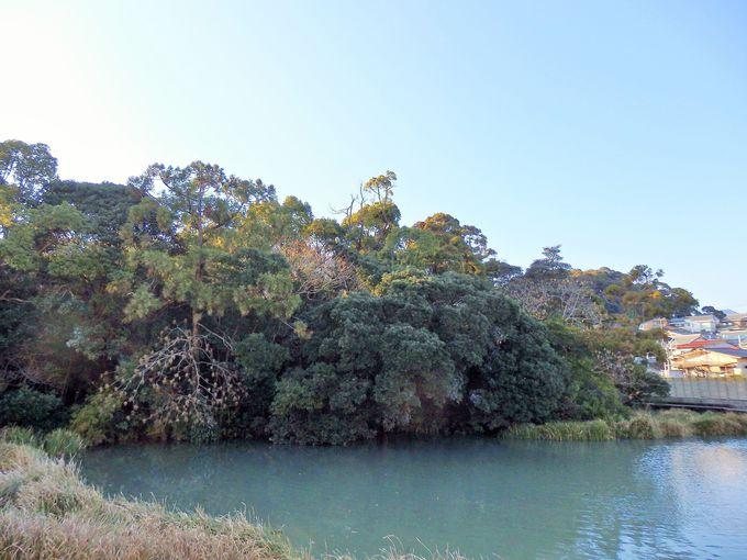 住宅街の中に突如現れる沼地と森