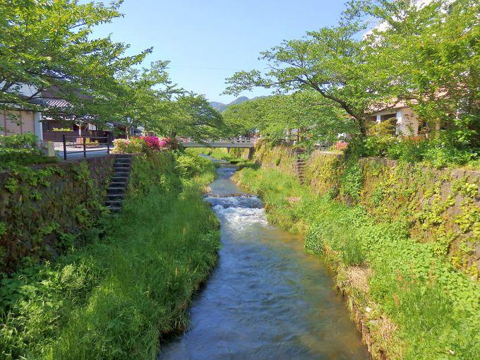 春には桜、初夏にはホタルが楽しめる一の坂川
