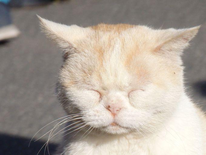 寺で暮らすたくさんの猫たち