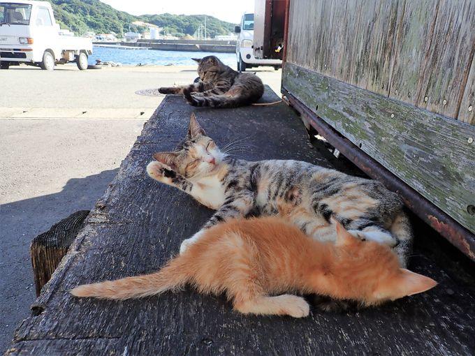 島で暮らす猫たち