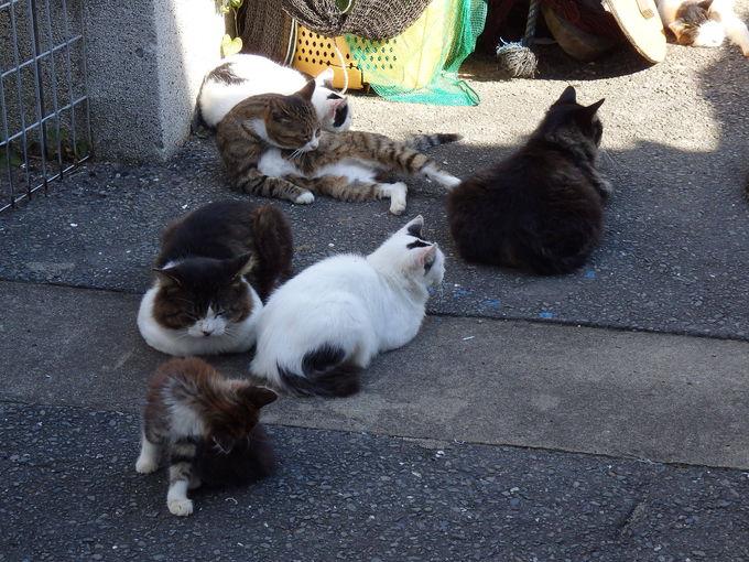 猫の多い場所を探索してみよう