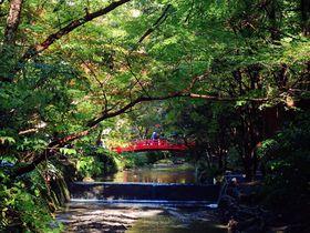 願いが意のままに叶う?見所たくさんの静岡「小國神社」