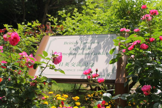 日本経済大学のイングリッシュ・ガーデン