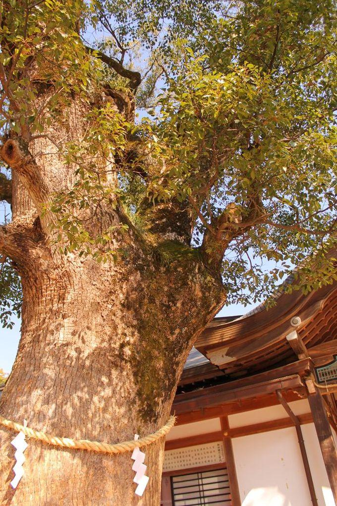 上宮にて、ご神木を抱きしめて開運パワーをいただく
