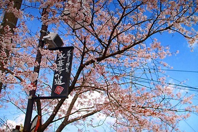 阿蘇神社門前町「水基巡りの道」は、古民家が並ぶレトロな散歩道
