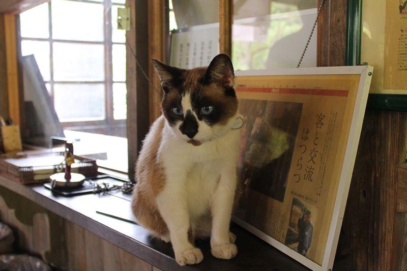 観光大使「たぬき猫にゃん太郎」に会える!築110年のレトロな「JR嘉例川駅」(鹿児島)