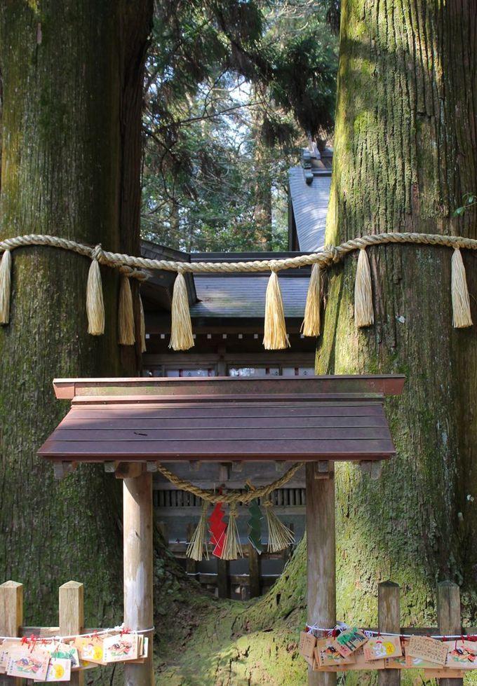ふたりは如何なることがあっても別れられない?「高千穂神社」夫婦杉