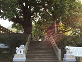 福山雅治が歌った「クスノキ」長崎山王神社・大楠の癒しパワーをいただこう