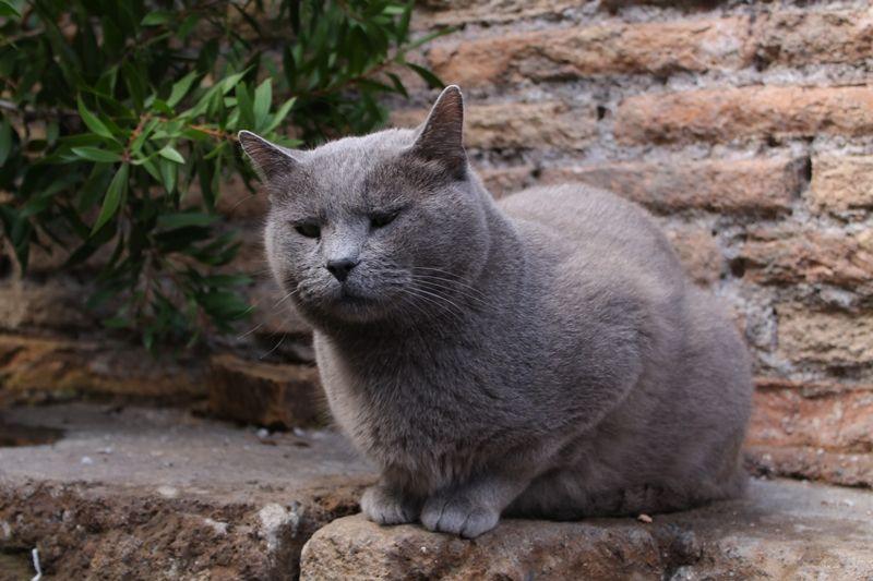 愛され猫がいっぱいの古代ローマ遺跡!イタリア「アルジェンティーナ神殿跡」