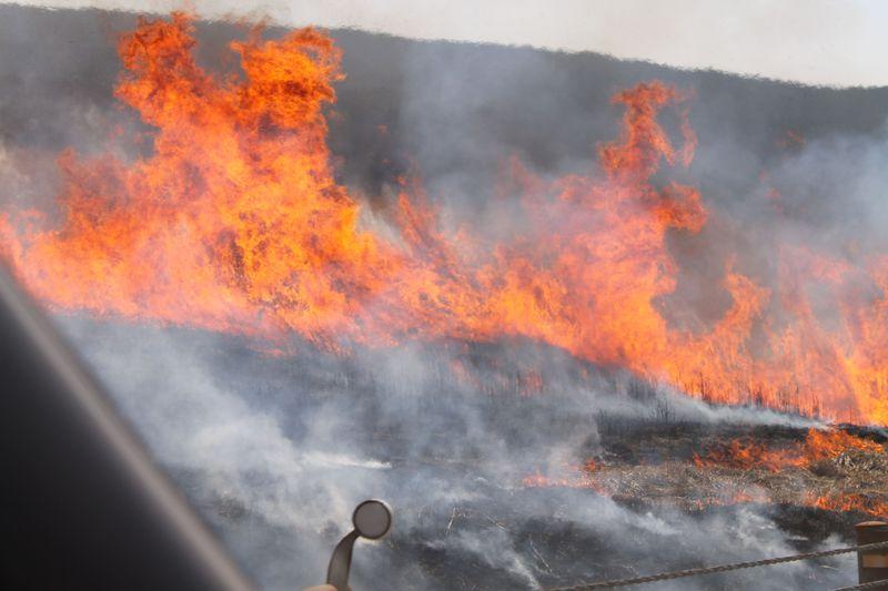 早春を告げる「阿蘇の野焼き」—丘を焼き尽くす炎がすごい!
