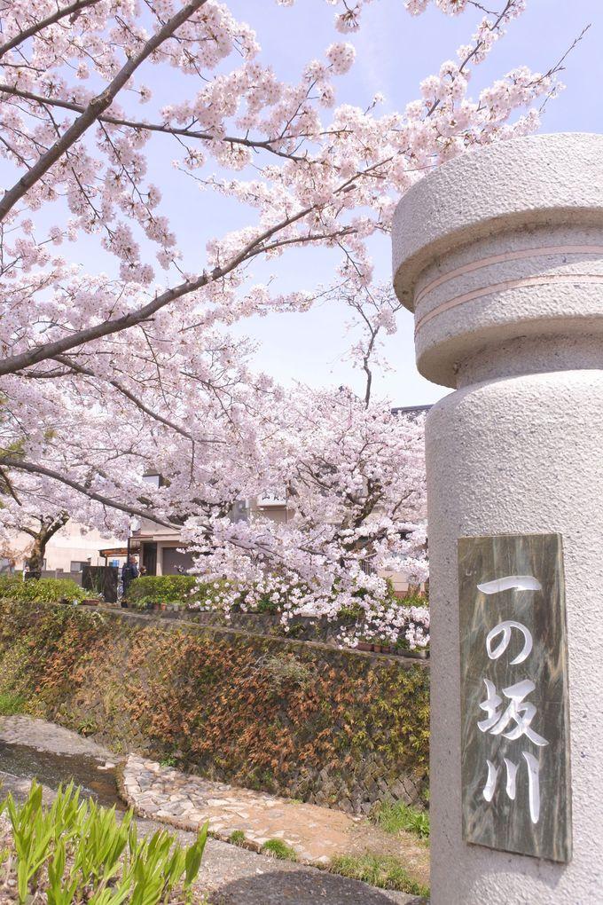 プロカメラマン御用達!桜あふれる橋の上でパチリ